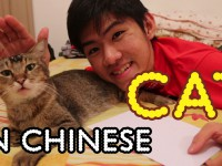 Mandarin Lesson: How to Say 猫 Cat in Chinese
